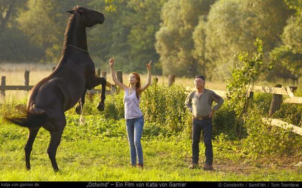 Pesade - (Pferde, Pony, shetty)
