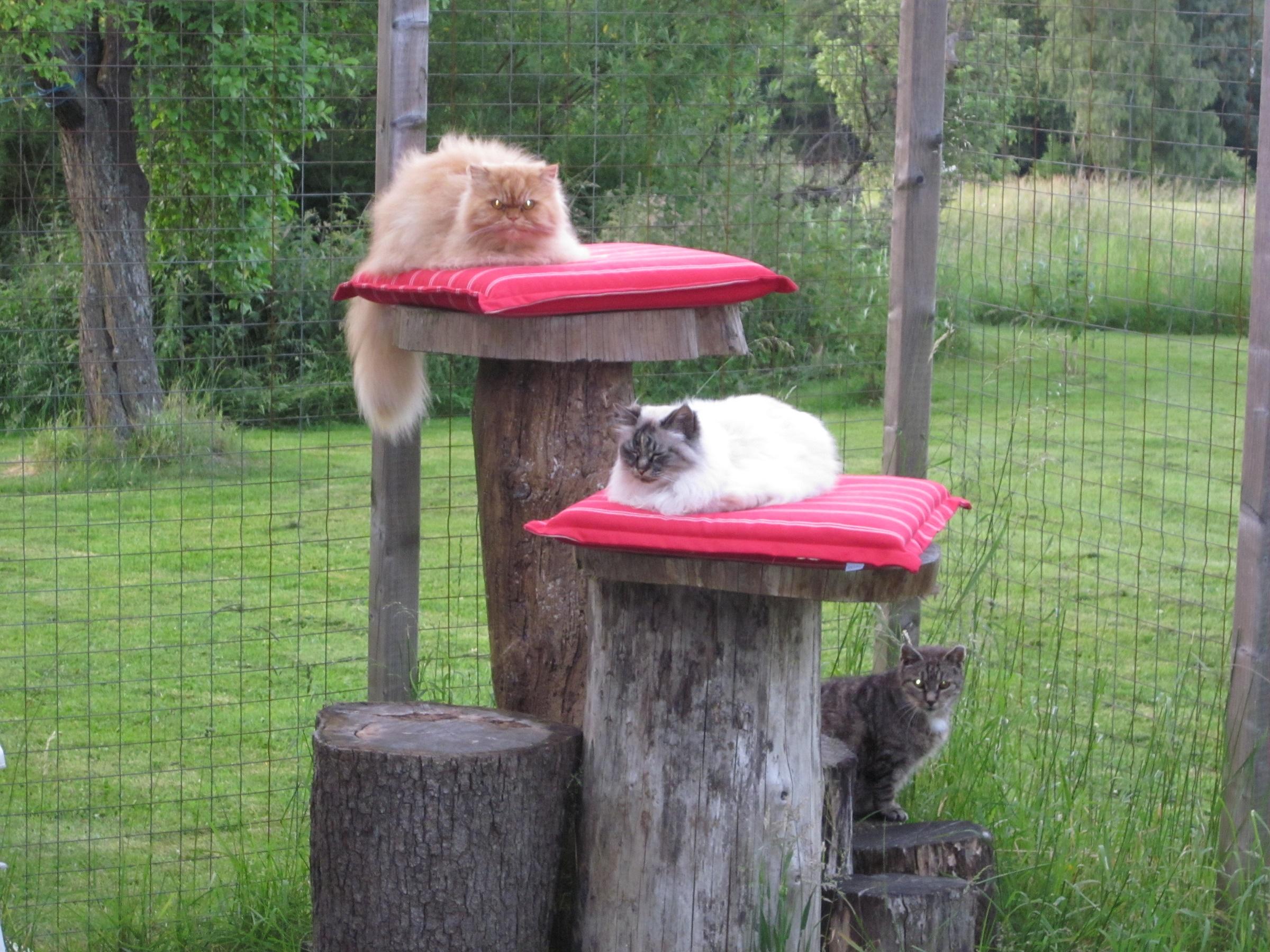 Idee für meinen Katzenbalkon? (Katze, Katzen, Balkon)