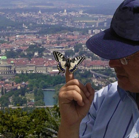 Ein frisch geschlüpfter Schwalbenschwanz vor seinem ersten Flug in die Freiheit.  - (Insekten, Zucht, Schmetterling)