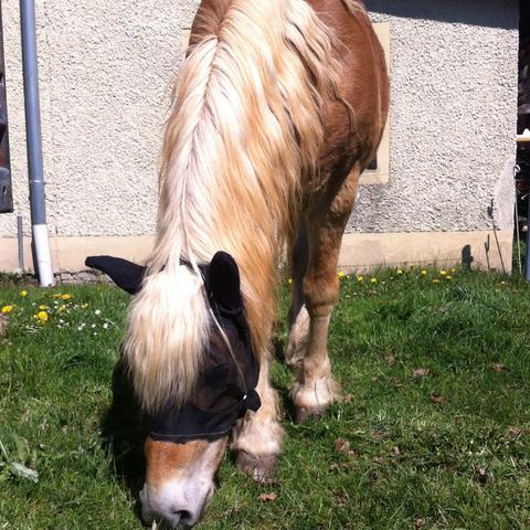 Meine rb <3 - (Pferde, Reitbeteiligung, Reiterhof)