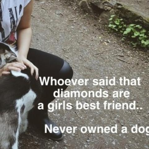 Oder Das! * *   (Hund, Sprüche, Zitat)