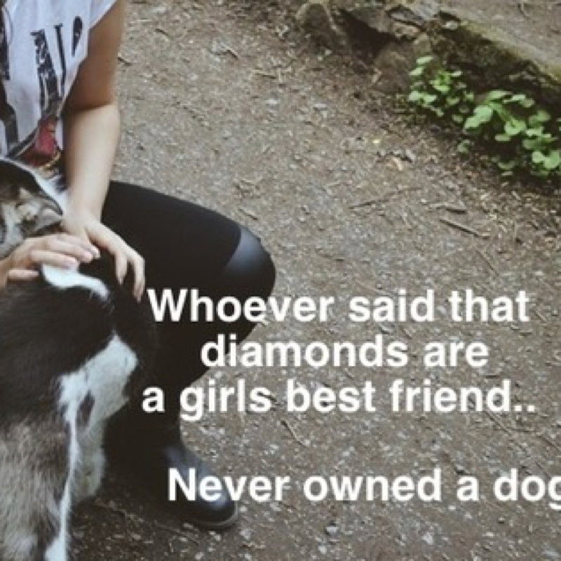 Best Dog Friend For A Border Collie