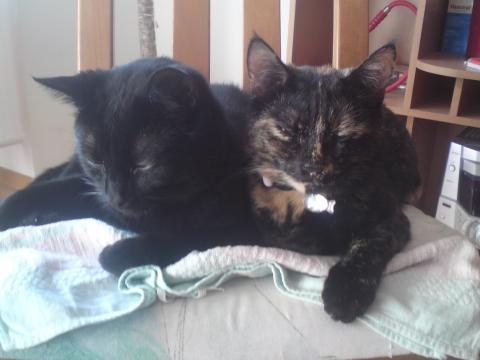 und das hier sind die geschwister - (Katzen)