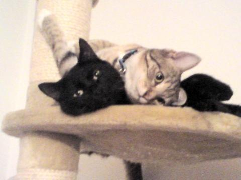hier ist der kleine am kuscheln mit dem großen  - (Katzen)
