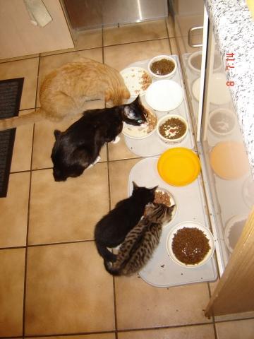 - (Tiere, Katzen, Ratgeber)