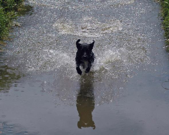Hund im Wasser - (Tiere, Hund, schlafen)