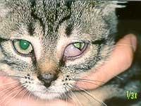 """""""Nick-Haut"""" - (Haustiere, Zecken, jetzt Augenschleier)"""