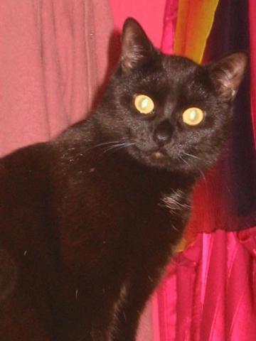 Meine erzählende Rhea.... - (Tiere, Katze, Katzenfutter)