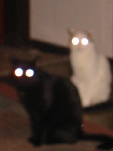 Meine Kätzchen, die unbekannten Wesen..... - (Tiere, Katze, Katzenfutter)