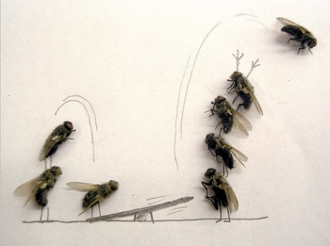 fliegenplage in der k che was hilft haushalt fliegen insekten. Black Bedroom Furniture Sets. Home Design Ideas