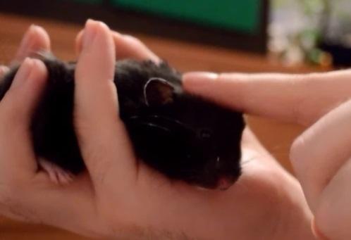 Sehr handzahm (: - (Tiere, Haustiere, Hamster)