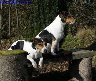 Rudel - (Hund, Hundehaltung)