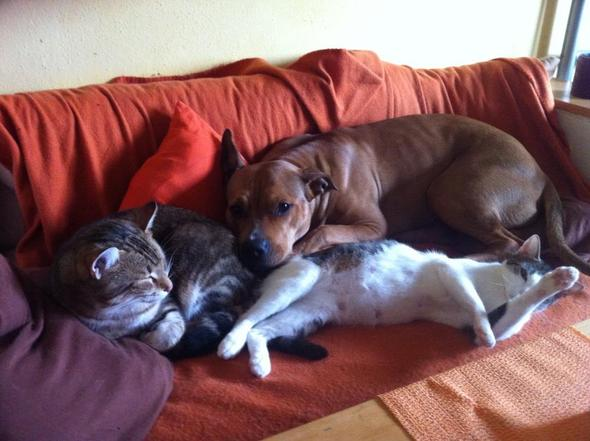 """Hund und Katz geht """"gar nicht"""" :D - (Tiere, Hund, Katzen)"""
