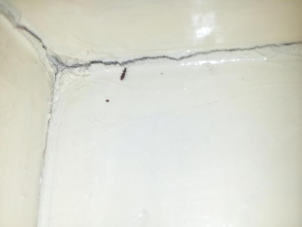 brauche hilfe komischer k fer am und im haus insekten ungeziefer. Black Bedroom Furniture Sets. Home Design Ideas