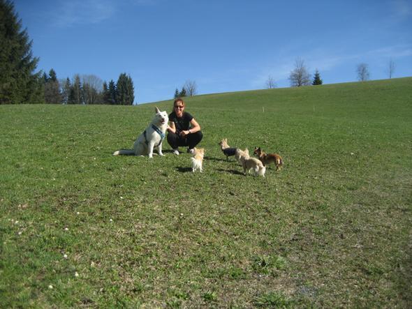 Meine 5 Hunde - (Hund, Körpergeruch beim Hund)