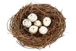 Dieses Ei? - (Vögel, Vogelei)