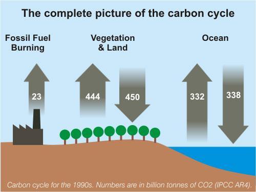 Kohlenstoffkreislauf (vereinfacht) - (Welt, Klima, Weltraum)