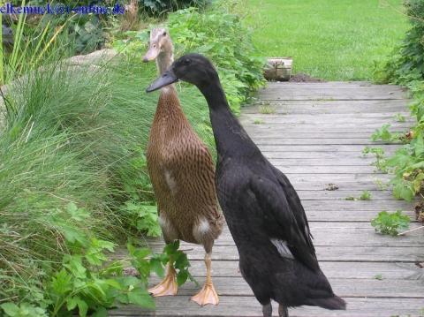 unsere beiden Damen - (Haushalt, Garten, Hühner)
