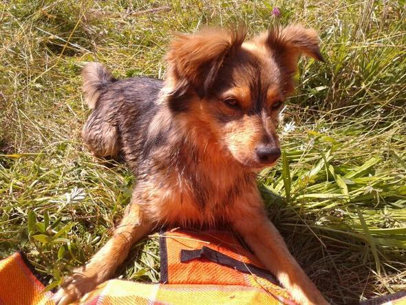 mein hund - (Freunde, Freundschaft, Langeweile)