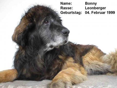 Meine Bonny - (Hund, Medikamente, Tierarzt)
