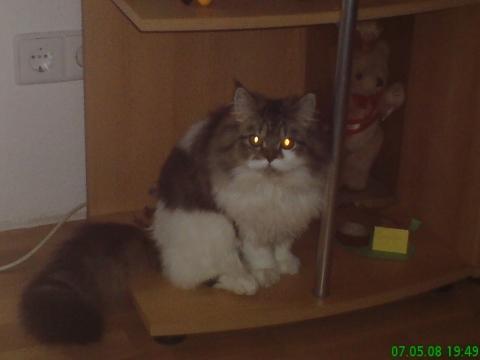 leo - (Katze, Haustiere, Namen)