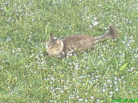 bonita - (Katze, Haustiere, Namen)