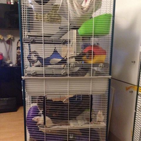 Käfig - (Ratten, Urin, kaefigeinrichtung)