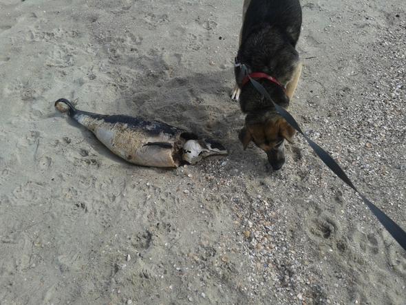 Toter Fisch - (Hund)