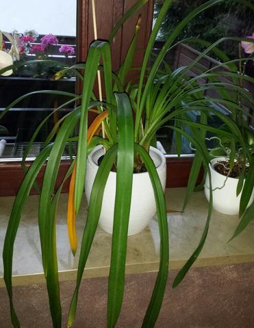 das ist sie - (Garten, Pflanzen, Orchideen)