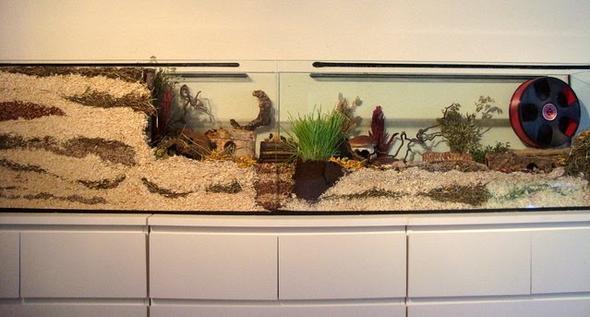 gutes Hamstergehege aus zwei Aquarien - (Aquarium, Einrichtung, Rennmaus)