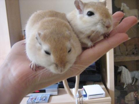 Cinnamon und Keks lassen grüßen - (Tiere, Maus, Terrarium)