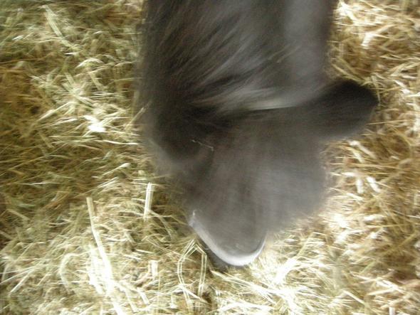 Mein Pferd Sonira - (Tiere, kaufen, Pferde)