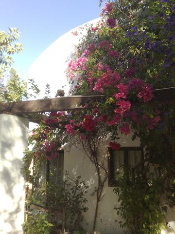 Blüten Ende Oktober/ Andalusien - (Wetter, Spanien)