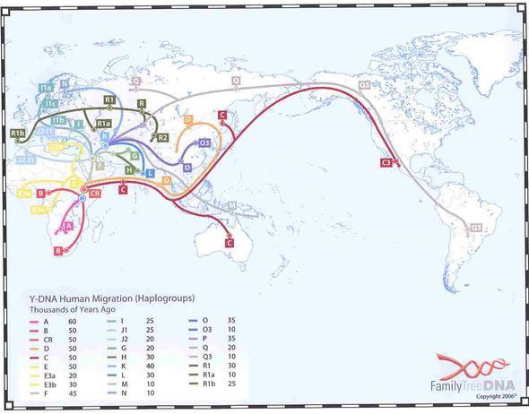 yDNA - Männer - (Menschen, Amerika, Asien)