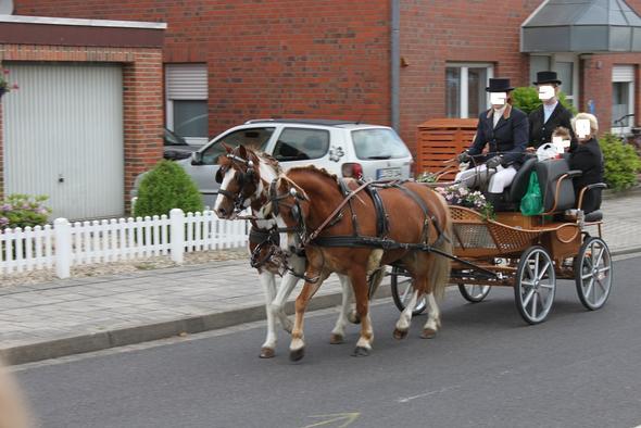 Pony Bollerwagen Ziehen Pferde Reiten Kutsche