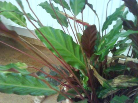 - (Pflanzen, Natur)