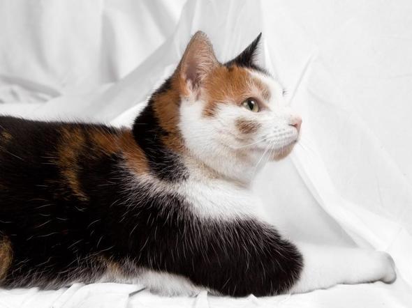 gibt es katzen die von natur aus klein sind tiere katze haustiere. Black Bedroom Furniture Sets. Home Design Ideas