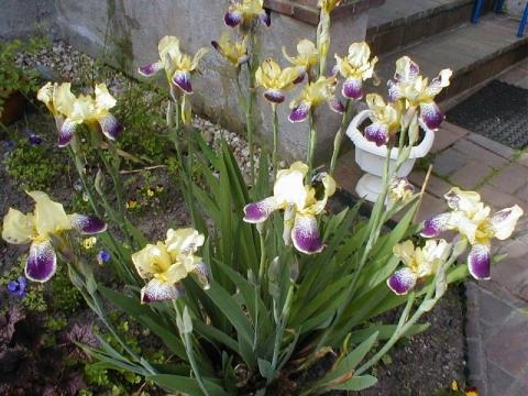 Zimmerpflanzen Die Viel Sonne Vertragen beautiful zimmerpflanzen die viel sonne vertragen ideas