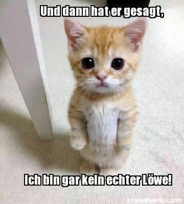 süße Katze - (Bilder, Katze, kostenlos)