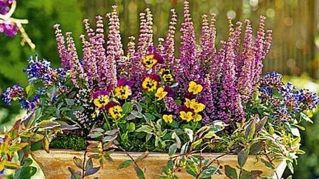 Pin Herbstbepflanzung überwinterung on Pinterest