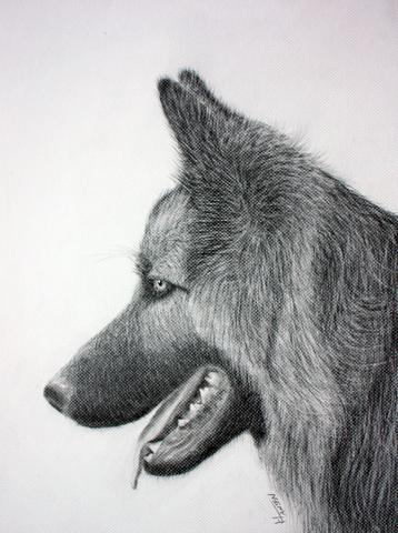 Schäferhund - (Kunst, zeichnen, Marke)