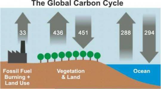 Kohlanstoffkreislauf (vereinfacht) - (Schule, Oberstufe, Facharbeit)