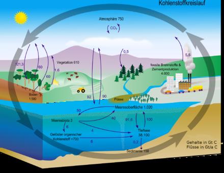 Schema Kohlenstoffzyklus - (Klimawandel, CO2)