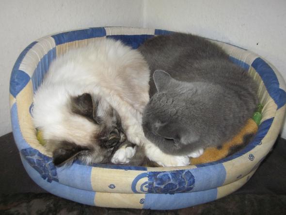 Lilly und Topo im Tiefschlaf - (Tiere, Katze, Katzen)