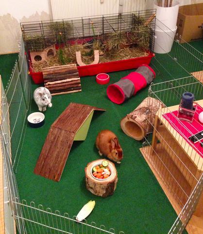 """""""Gehege"""" Inspiration (1) - (Tiere, Kaninchen, klopfen)"""