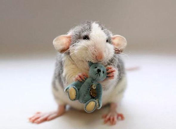 Ratte - (Ratten, komische geräusche)