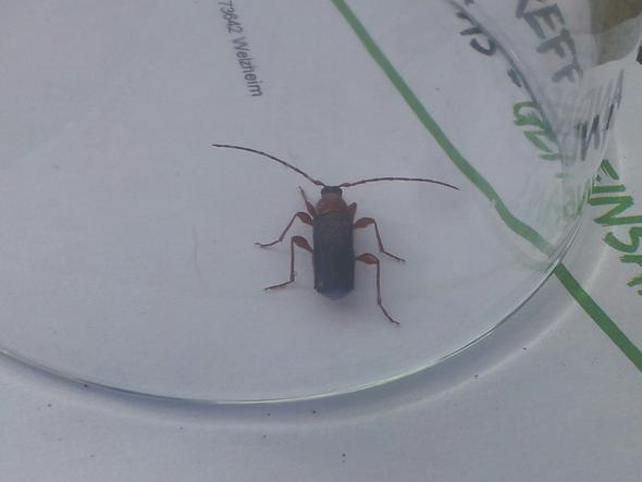 so hier das 1. - (Insekten, Schädlinge, Kammerjäger)