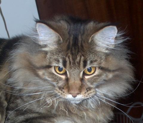 Eins meiner Fellchen :-D - (Katzen, Namen)