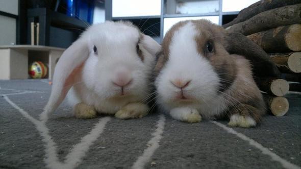 Zwei Kaninchen - (Kaninchen, alt)