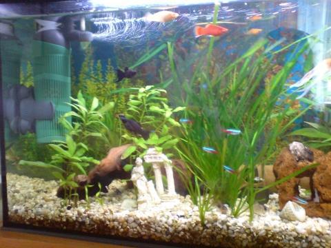 aquarium sauber machen de aquarium filter tank. Black Bedroom Furniture Sets. Home Design Ideas